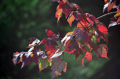 Fall Red Print by Sandi OReilly