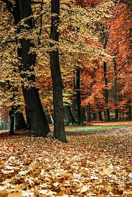 Fall Scenery Print by Hannes Cmarits