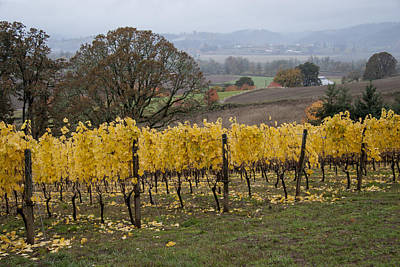 Pinot Noir Photograph - Fall Scenic by Jean Noren