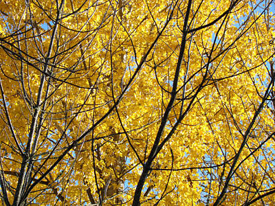 Fall Trees Art Prints Yellow Autumn Leaves Print by Baslee Troutman