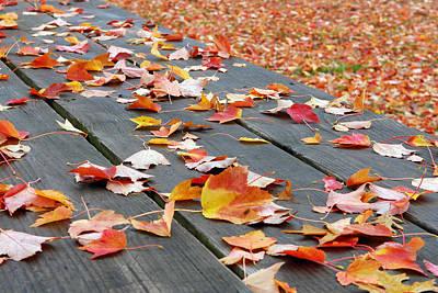 Landscape Photograph - Fallen Leaves by Lisa Phillips
