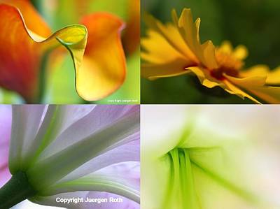 Tulip Photograph - Falling In Love With ... by Juergen Roth