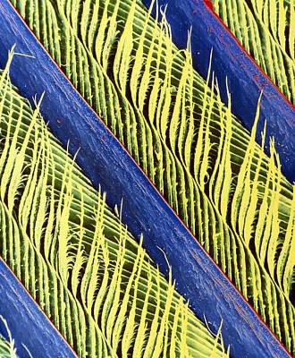 Magpies Photograph - False-colour Sem Of A Magpie's Feather by Dr Jeremy Burgess