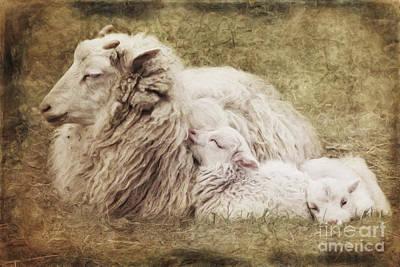 Sheep Mixed Media - Family by Angela Doelling AD DESIGN Photo and PhotoArt