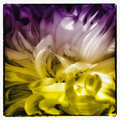 Digital Photograph - Fantasy Dahlia by David Patterson