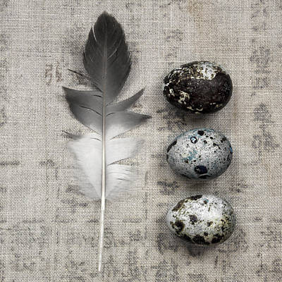 Feather And Three Eggs Print by Carol Leigh