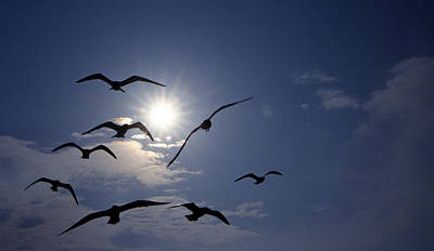 Of Birds Photograph - Feeding Frenzy by Skip Willits