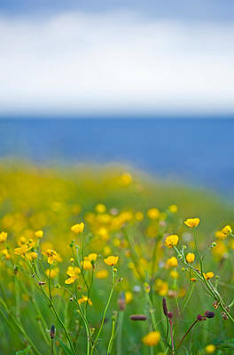 Field Of Flowers In Front Of The Sea Print by Sindre Ellingsen