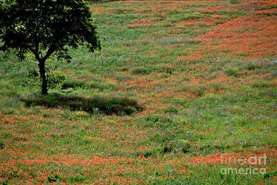 Field Of Poppies. Print by Bernard Jaubert