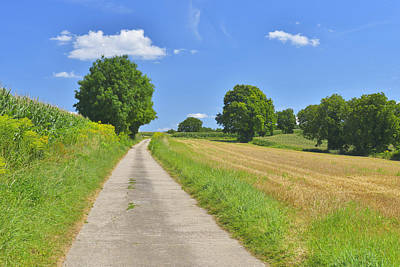 Walnut Tree Photograph - Field Road by Raimund Linke