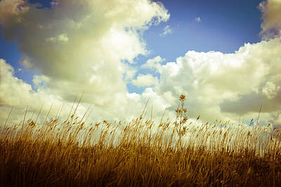 Landscape Photograph - Fields Of Summer by Ruth MacLeod