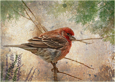Finch Art Or Greeting Card Blank Print by Debbie Portwood