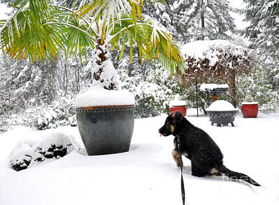Dog Photograph - First Snow  2 by Tanya  Searcy