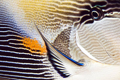 Water Photograph - Fish Abstract by Rico Besserdich