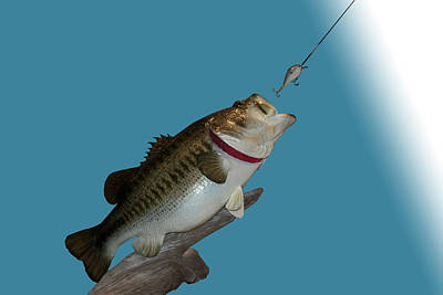 Large Mouth Bass Digital Art - Fish Mount Set 13 A by Thomas Woolworth