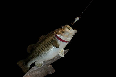 Large Mouth Bass Digital Art - Fish Mount Set 13 C2 by Thomas Woolworth