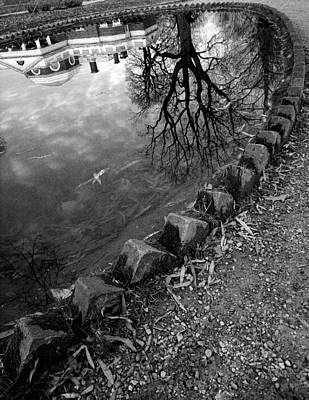 Fish Pond I Print by Steven Ainsworth