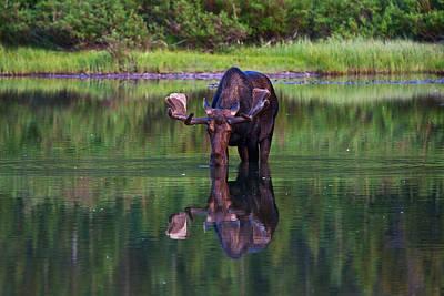 Many Glacier Photograph - Fishercap Bull by Mark Kiver