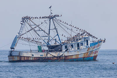 Fishing Boat With Birds Print by Craig Lapsley