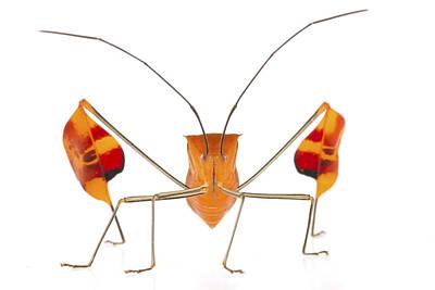 Piotr Naskrecki Photograph - Flagfooted Bug Barbilla Np Costa Rica by Piotr Naskrecki