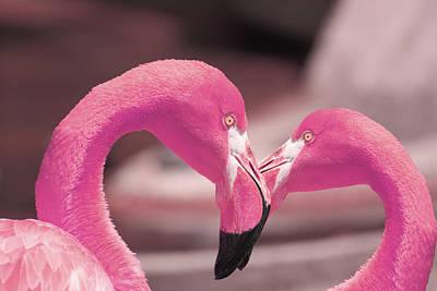 Flamingo Photograph - Flamingo Heart 3 by Robert Jones