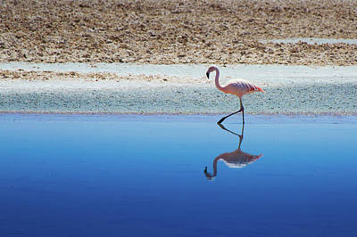 Birds Photograph - Flamingo by MaCnuel