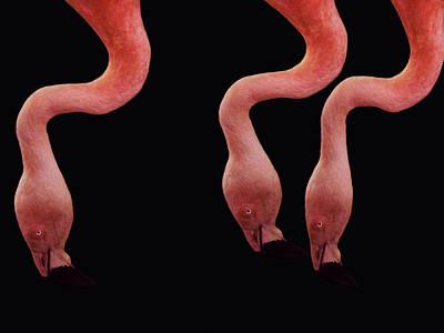 Flamingo Photograph - Flamingos by Lourry Legarde