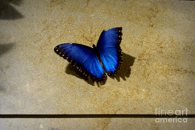 Flutter Photograph - Flawed Beauti-fly by Nicole Tru Photography