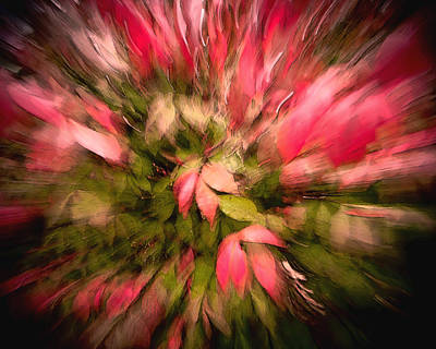 Burning Bush Digital Art - Floral Fun by David Coblitz