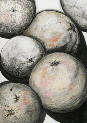 Grapefruit Drawing - Florida Grapefruit by Rebecca Moore