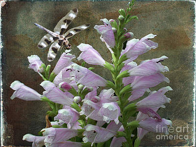 Flower And Dragonfly Print by Jim Wright