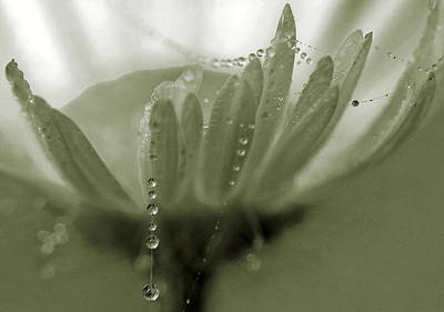 Flower And Drops Print by Odon Czintos