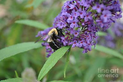 Lenora Berch Photograph - Flower Close Up by Lenora Berch