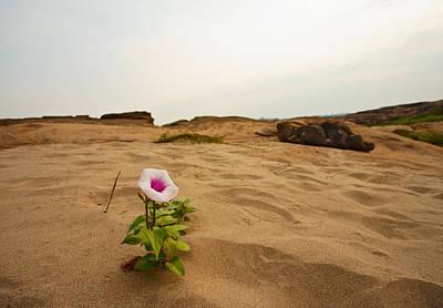Flower In Desert Print by Panya Jampatong