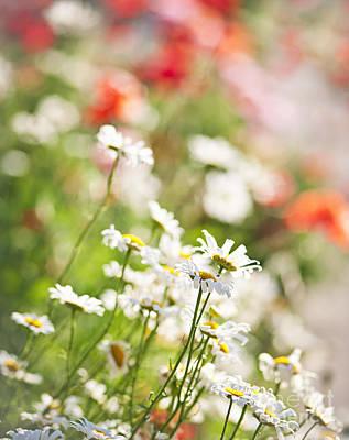 Poppy Photograph - Flower Meadow by Elena Elisseeva