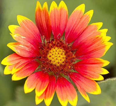 Flower Power Print by Daphne Sampson