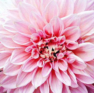 Y120817 Photograph - Flower by W-anshu
