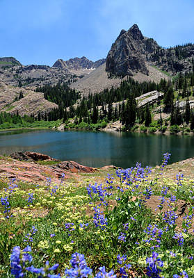 Blanche Photograph - Flowering Lake Blanche - Wasatch Mountains by Gary Whitton