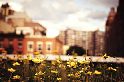 City Scenes Photograph - Flowers - High Line Park - New York City by Vivienne Gucwa