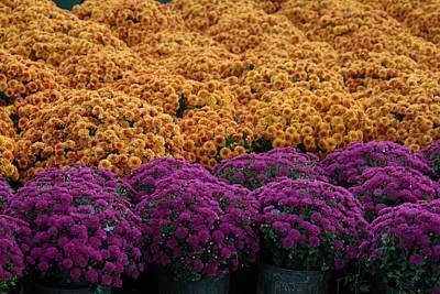 Flowers 280 Print by Joyce StJames