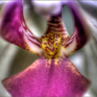 Orchids Photograph - #flowers #orchid #orchids #macro by Omar Colon