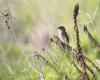 Flycatcher On A Twig Print by Roena King