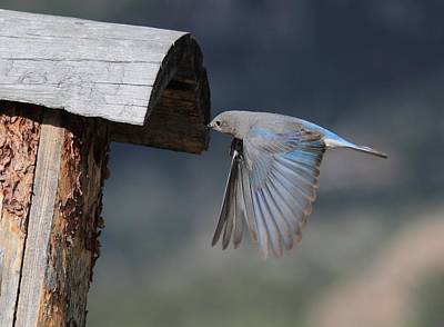 Birds Photograph - Flying Around by Shane Bechler