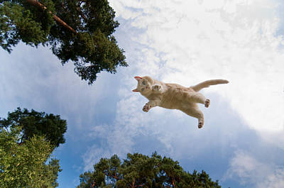 Flying Cat Print by Micael  Carlsson