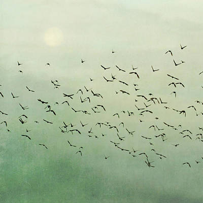 Flying Flock Of Birds Print by Laura Ruth