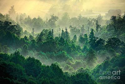 Foggy Treetops Print by Dan Carmichael