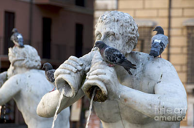 Dove Photograph - Fontana Del Moro In Piazza Navona. Rome by Bernard Jaubert