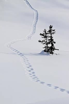 Footstep Trail On Snow Print by Gerhard Fitzthum