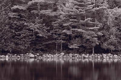 Jordan Pond Photograph - Forest At Jordan Pond Acadia Bw by Steve Gadomski