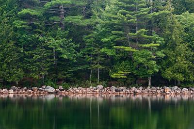 Forest At Jordan Pond Acadia Print by Steve Gadomski